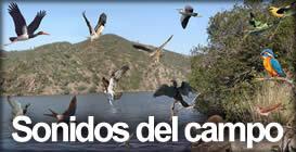 Sonidos de las aves en la naturaleza